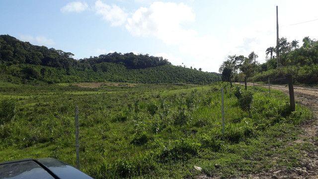 Fazenda 444 Hectares, Pastagem, Produção de Palmito Pupunha (Willian Ricardo) - Foto 11