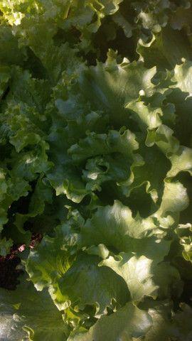 Horta alface,couve,almeirao ,cebolinha - Foto 2