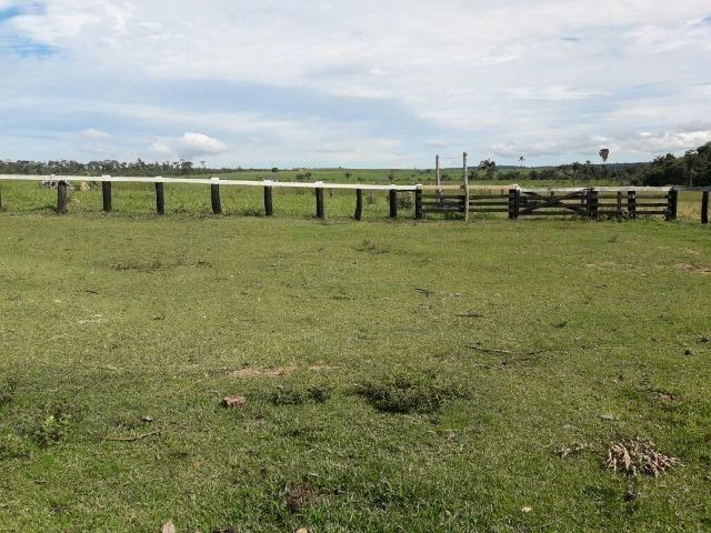 Fazenda de 261 alqueires, com 250 aberto 30 km de Nova Santa Helena -MT - Foto 14