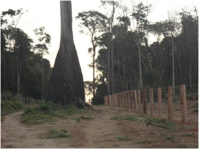 Área de Mato de 140 alqueires, 72 km de Castelo de Sonhos -PA - Foto 5