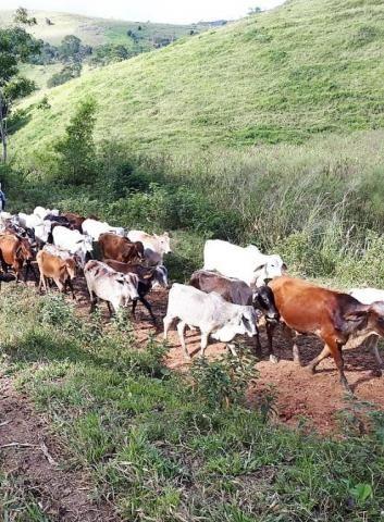 Fazenda Itagi 500 has - Foto 2
