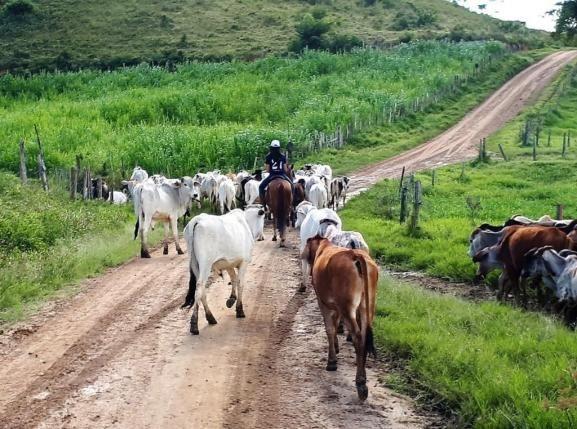 Fazenda Itagi 500 has - Foto 5