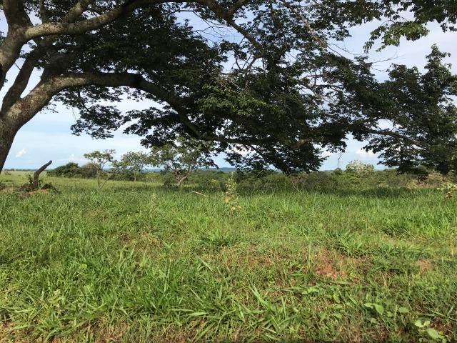Fazenda 37,3 Alqueires ( 180,85 ha )- Nova Fátima-GO\Hidrolândia-GO - Foto 2