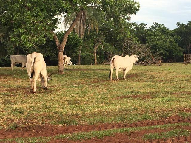 Linda fazenda com casa Sede - Foto 20