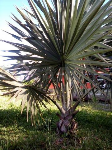 Chácara à venda em Interior, Fazenda souza cod:145 - Foto 4