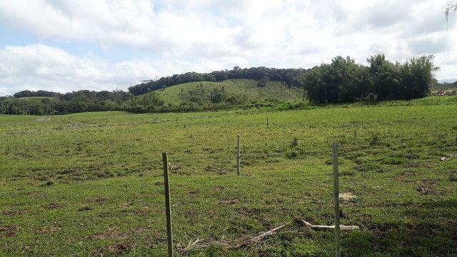 Fazenda 444 Hectares, Pastagem, Produção de Palmito Pupunha (Willian Ricardo) - Foto 20