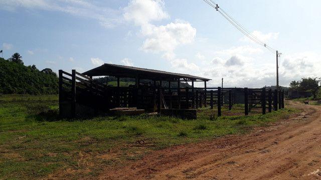 Fazenda 444 Hectares, Pastagem, Produção de Palmito Pupunha (Willian Ricardo) - Foto 13
