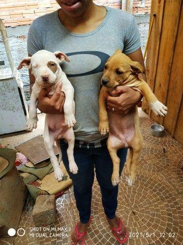 Filhotes de cachorro - Foto 3