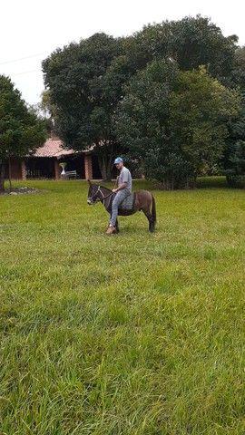 Pônei,mini burro torrando - Foto 4