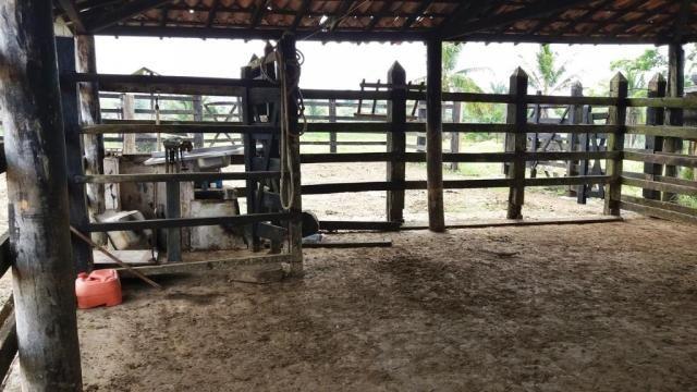 Fazenda 240 has em Tancredo Neves/BA - Foto 17
