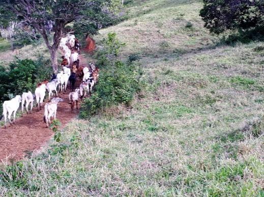 Fazenda Itagi 500 has - Foto 3