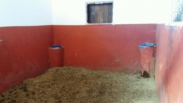 Haras em Louveira estruturado - Foto 5
