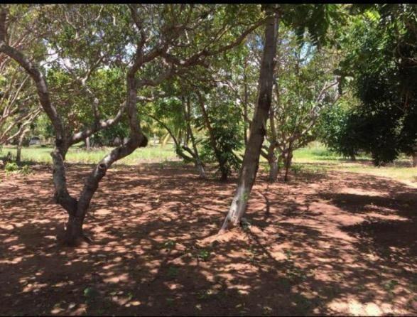 Chácara lago do manso com 3 dormitórios à venda, 150000 m² por r$ 400.000 - zona rural - c - Foto 15