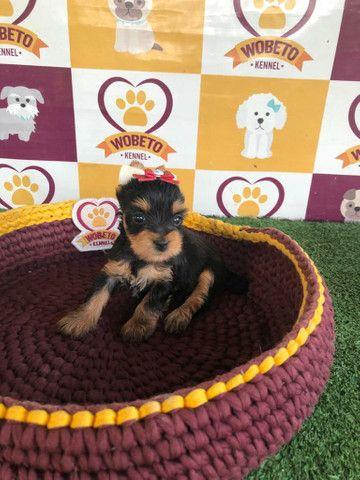 Yorkshire Terrier Kennel Wobeto - Foto 2