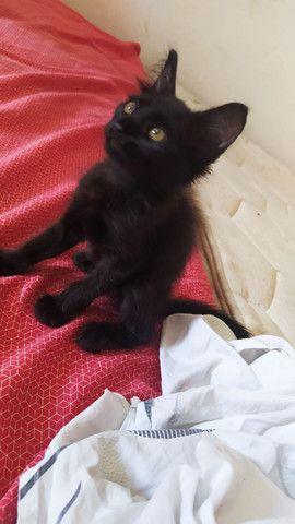 Gatinha precisando de um lar - Foto 3