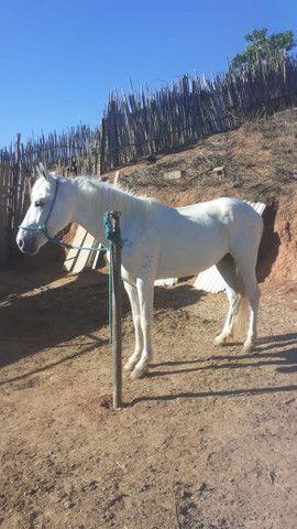 Vendo cavalo mangalarga macha batida tem 6 anos - Foto 2