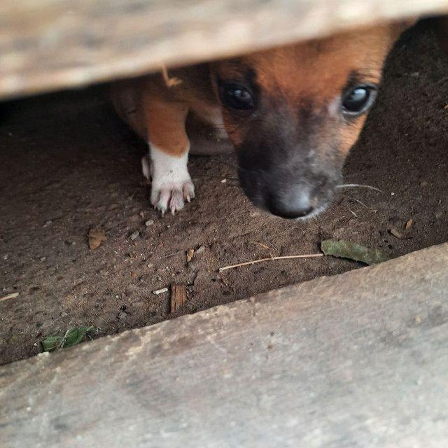 Cachorrinho  - Foto 4