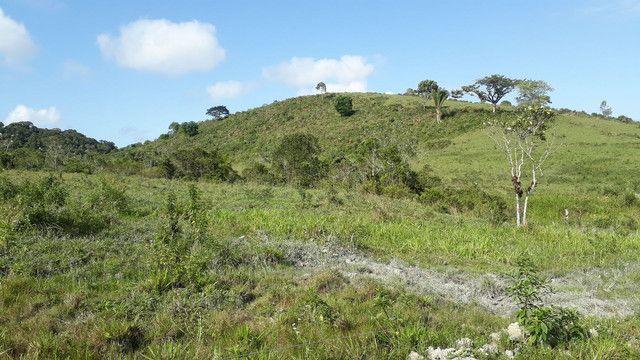 Fazenda 444 Hectares, Pastagem, Produção de Palmito Pupunha (Willian Ricardo) - Foto 16