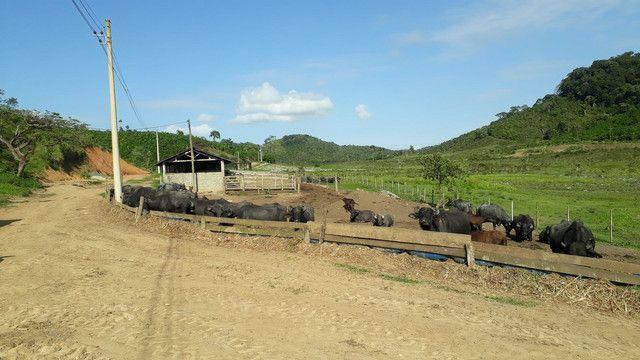 Fazenda 444 Hectares, Pastagem, Produção de Palmito Pupunha (Willian Ricardo) - Foto 9