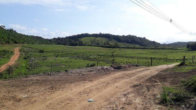 Fazenda 444 Hectares, Pastagem, Produção de Palmito Pupunha (Willian Ricardo) - Foto 12