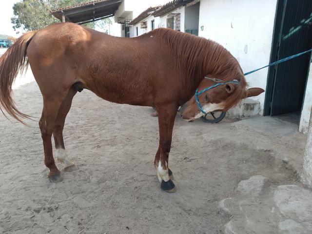 Cavalo de direita, baixei prá vender - Foto 4