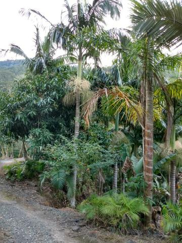 Terreno com 8 alqueires=19 hectares - Foto 20