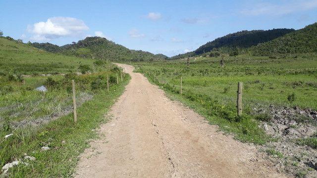 Fazenda 444 Hectares, Pastagem, Produção de Palmito Pupunha (Willian Ricardo) - Foto 14