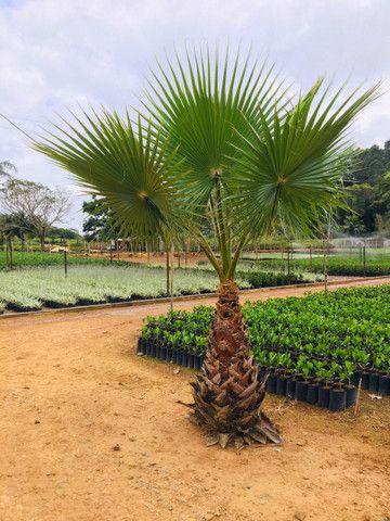 Plantas palmeiras e árvores