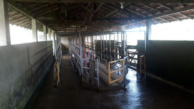 Fazenda 444 Hectares, Pastagem, Produção de Palmito Pupunha (Willian Ricardo) - Foto 19