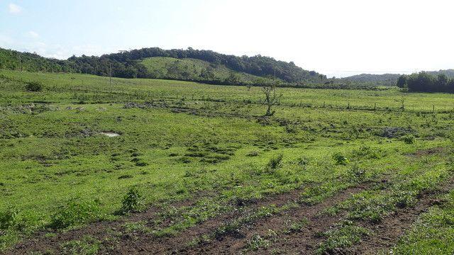 Fazenda 444 Hectares, Pastagem, Produção de Palmito Pupunha (Willian Ricardo) - Foto 15