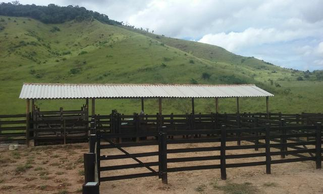 250 hectares terra pronta