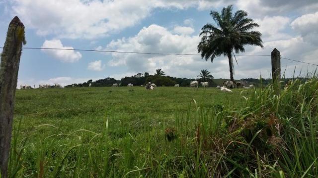 Fazenda 240 has em Tancredo Neves/BA - Foto 11