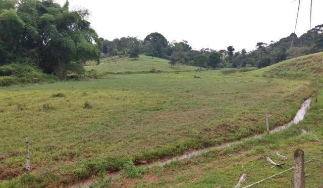 Fazenda 240 has em Tancredo Neves/BA - Foto 2