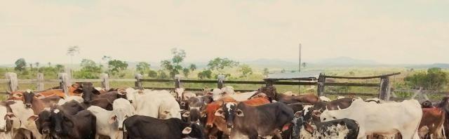Fazenda Potiraguá/BA 678 hectares