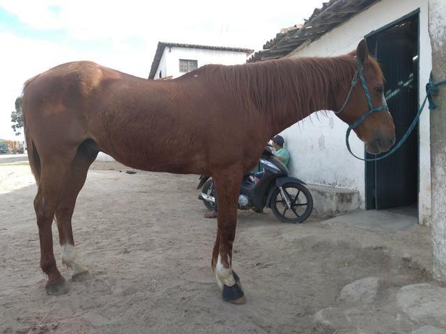 Cavalo de direita, baixei prá vender - Foto 3
