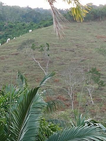 Terreno com 8 alqueires=19 hectares - Foto 9