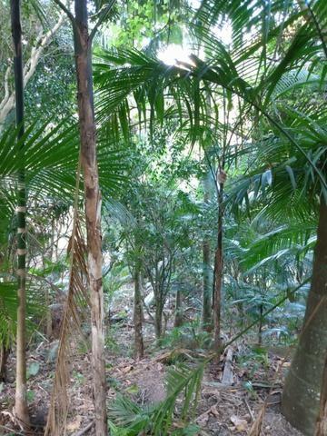 Terreno com 8 alqueires=19 hectares - Foto 13