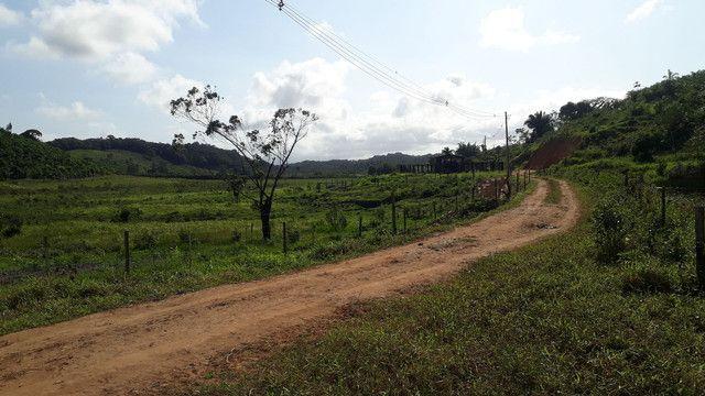 Fazenda 444 Hectares, Pastagem, Produção de Palmito Pupunha (Willian Ricardo) - Foto 18