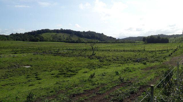 Fazenda 444 Hectares, Pastagem, Produção de Palmito Pupunha (Willian Ricardo) - Foto 17