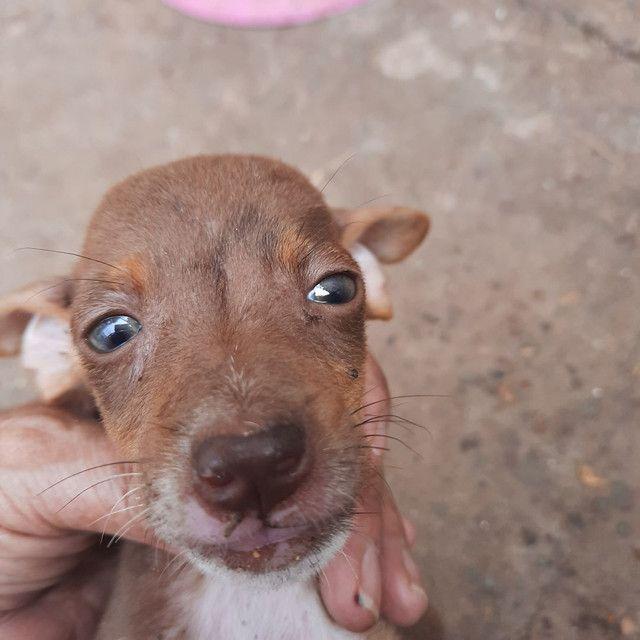 Cachorrinho  - Foto 6