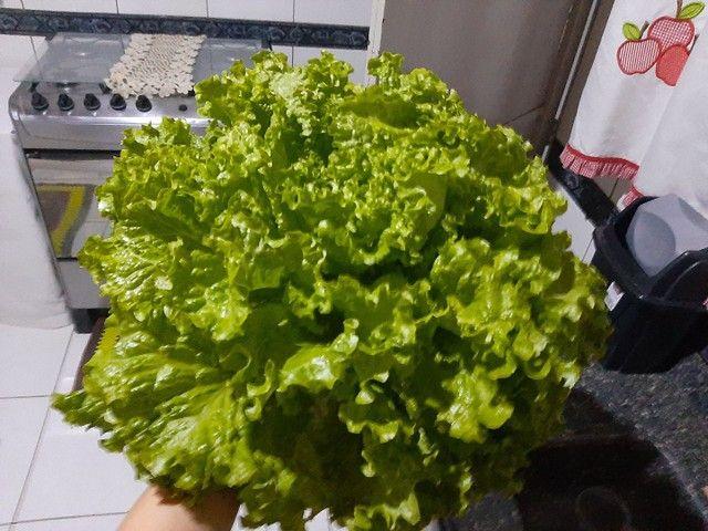Verduras - Foto 4