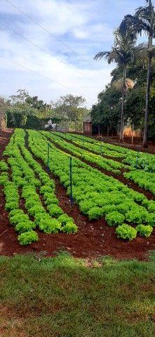 Verduras - Foto 3