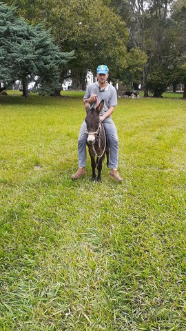 Pônei,mini burro torrando - Foto 2