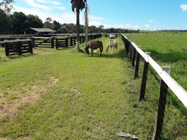 Fazenda de 261 alqueires, com 250 aberto 30 km de Nova Santa Helena -MT - Foto 5