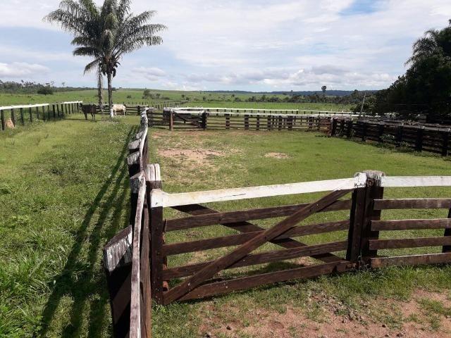 Fazenda de 261 alqueires, com 250 aberto 30 km de Nova Santa Helena -MT - Foto 9