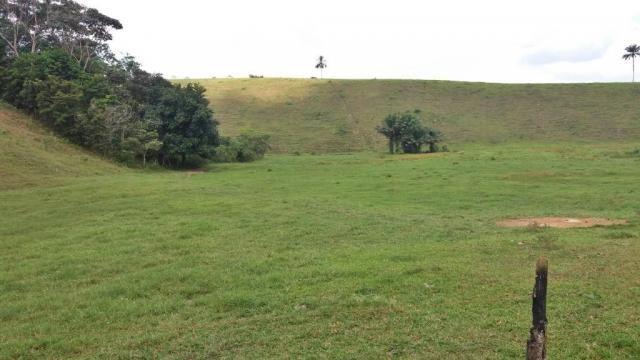 Fazenda 240 has em Tancredo Neves/BA - Foto 5