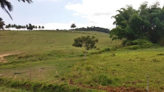 Fazenda 240 has em Tancredo Neves/BA - Foto 4