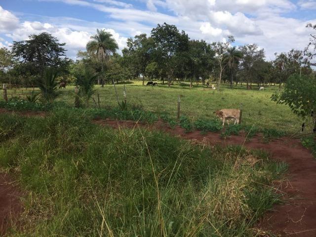 Linda fazenda com casa Sede - Foto 7