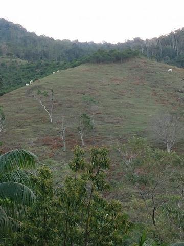 Terreno com 8 alqueires=19 hectares - Foto 11