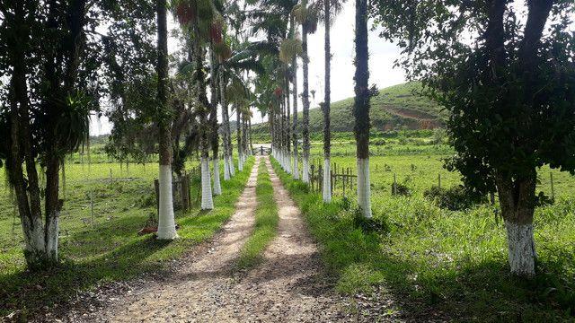 Fazenda 444 Hectares, Pastagem, Produção de Palmito Pupunha (Willian Ricardo)